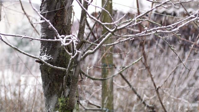 ms-snow bäume umfallen - fokus auf den vordergrund stock-videos und b-roll-filmmaterial