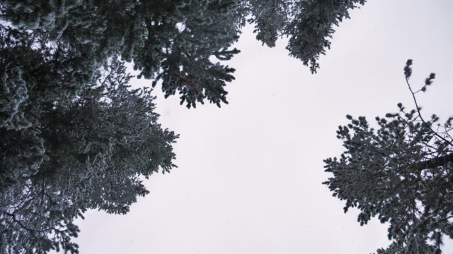 snow falling - simplicity stock videos & royalty-free footage