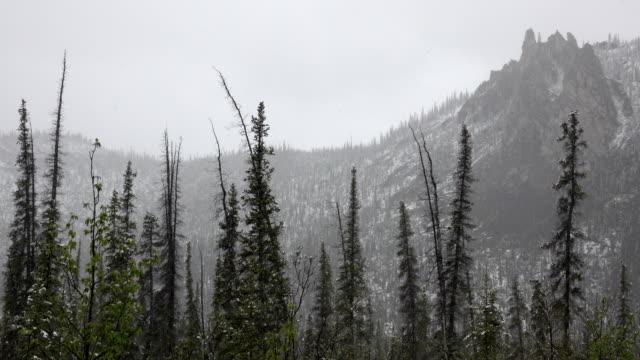 Snow falls black spruce Taiga Range mountain dolomite tors spires Dempster Highway Yukon