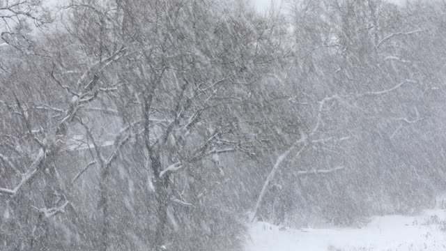 snow falls during a winter blizzard - snow storm stock videos and b-roll footage
