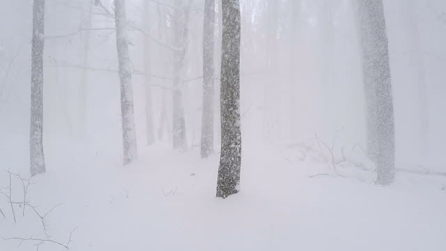 snow falls from the tree branches. - blizzard stock videos & royalty-free footage