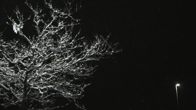 Snow falls gently from night sky