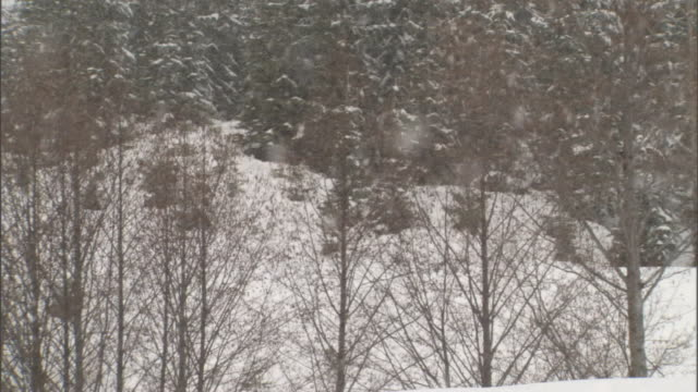 vidéos et rushes de snow falls in a mountain forest with evergreens and bare deciduous trees. - bare tree