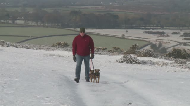 snow falls in parts of the country england devon various dogwalker along through snow with dogs - snow stock videos & royalty-free footage