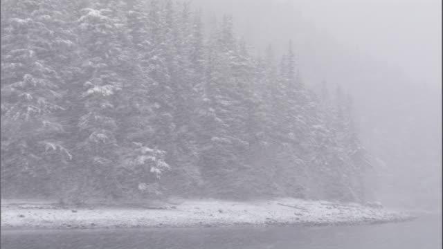 stockvideo's en b-roll-footage met snow falls on a coastal coniferous forest. available in hd. - alaska verenigde staten
