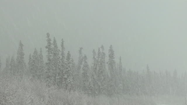 snow falls on a forest. - blizzard stock videos & royalty-free footage