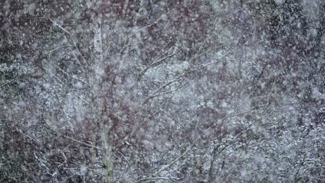 snow flurry in chiswick nature reserve on january 24, 2021 in london, united kingdom. parts of the country saw snow and icy conditions as arctic air... - snow stock videos & royalty-free footage