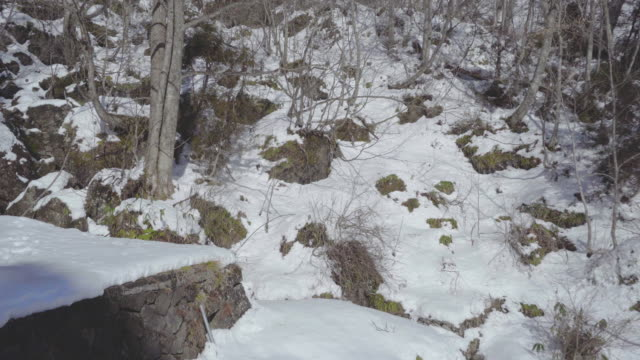 snow forest, nagano, japan, asia - shinto shrine stock videos & royalty-free footage