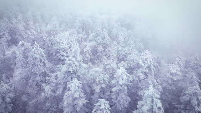 Snow forests
