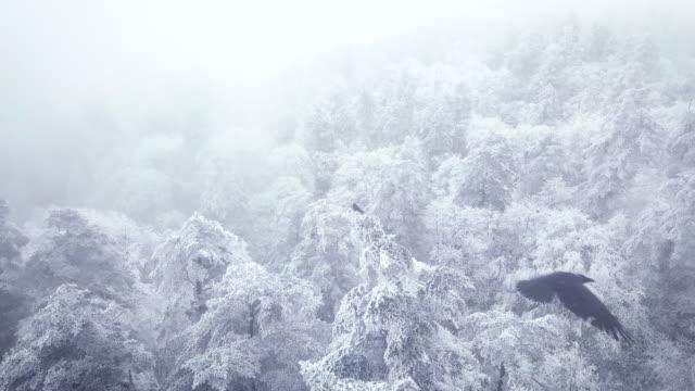 snow forests - 四川省点の映像素材/bロール