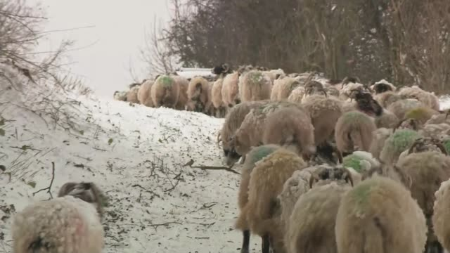 Further countrywide disruption as snow begins to thaw ENGLAND Cumbria near Penrith Various farmer Chris Purdham moving his flock of sheep through...