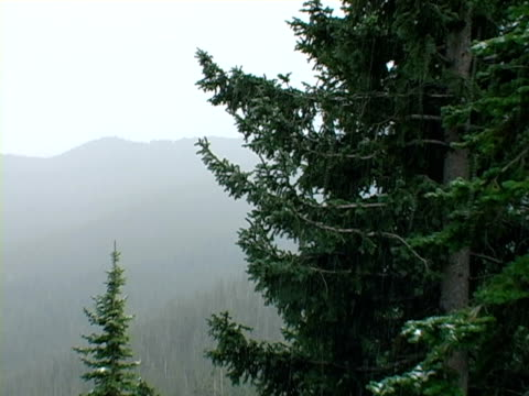 neve nelle montagne del colorado -01 - pinacee video stock e b–roll
