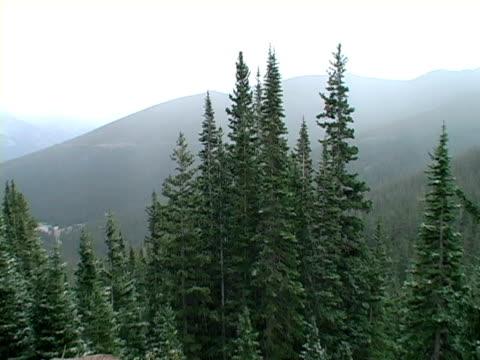 neve nelle montagne del colorado -02 - pinacee video stock e b–roll
