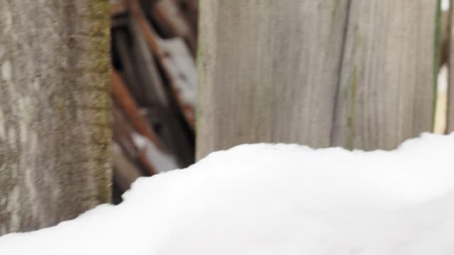 vidéos et rushes de bulletins d'enneigement en vieux back yard - clôture jardin