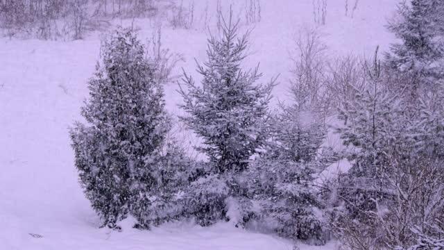 vídeos de stock e filmes b-roll de snow in the country - pinaceae