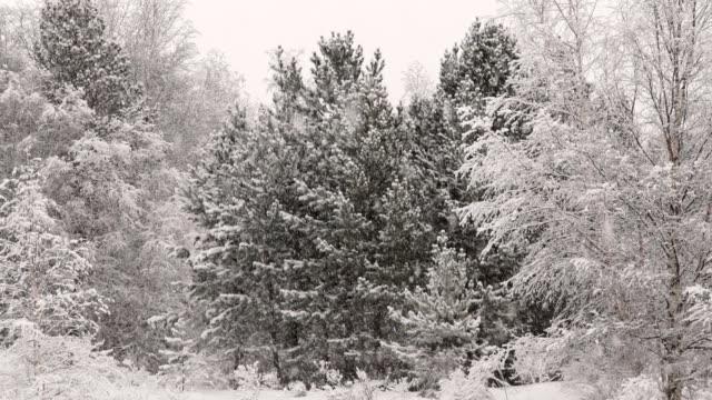 stockvideo's en b-roll-footage met sneeuw in het bos - berk