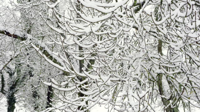 snow in winter, gorbeia parque natural, alava, basque country, spain, europe - parque natural stock videos and b-roll footage