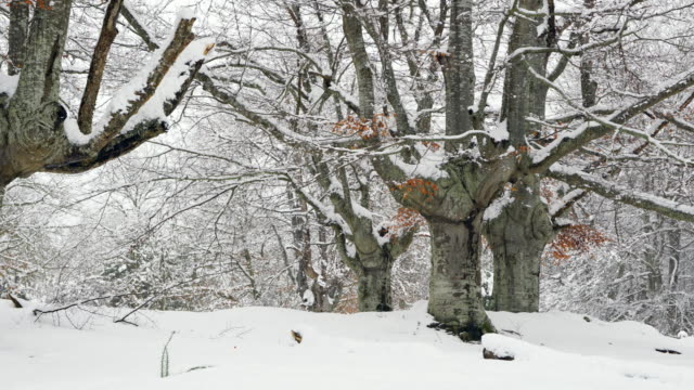Snow in winter, Gorbeia Parque Natural, Alava, Basque Country, Spain, Europe
