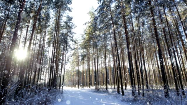 Sneeuw in de winter ochtend bos. Selectieve aandacht