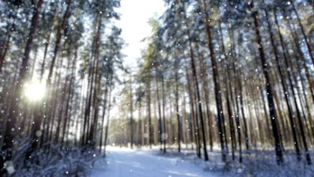 Snow in winter morning forest (Loopable)