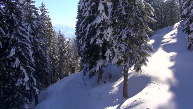 Snow is drifted around tall conifers in a mountainous area.
