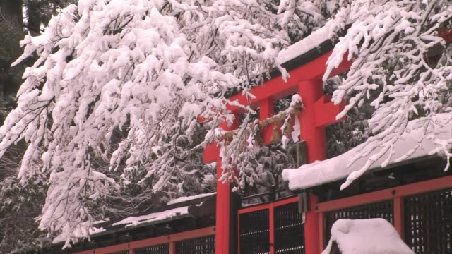 snow ladened branches hover over a shrine gate, koyasan, honshu, japan - honshu stock videos and b-roll footage