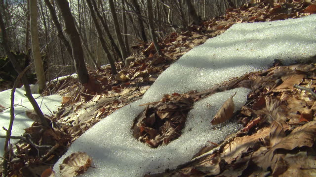 snow melting, early spring - melting stock videos & royalty-free footage