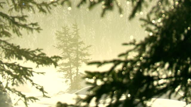 Schnee schmelzen auf Bäumen