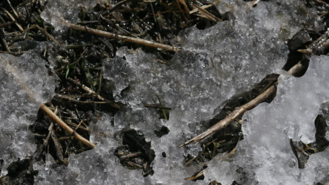 Snow melts revealing dead grass and twigs.