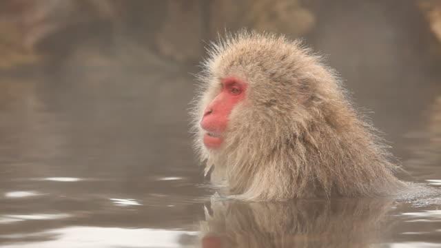 雪猿(ニホンザル)の温泉 - 温泉点の映像素材/bロール