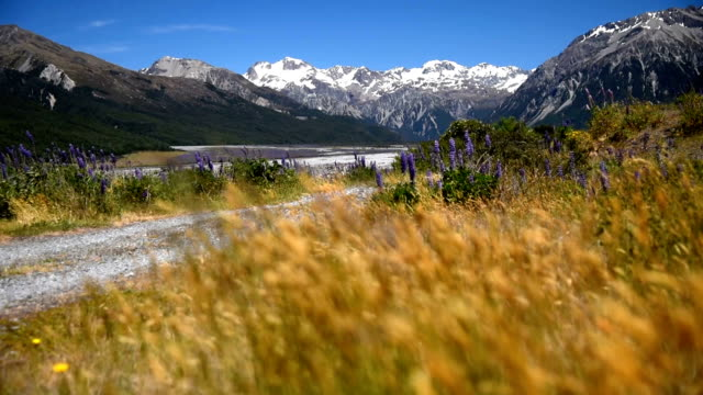 snow mountain with yellow field and blue sky nature footage background in arthur's pass , canterbury , new zealand - distant stock videos & royalty-free footage