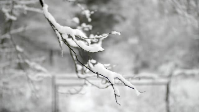 snow on branches in winter - branch stock videos & royalty-free footage