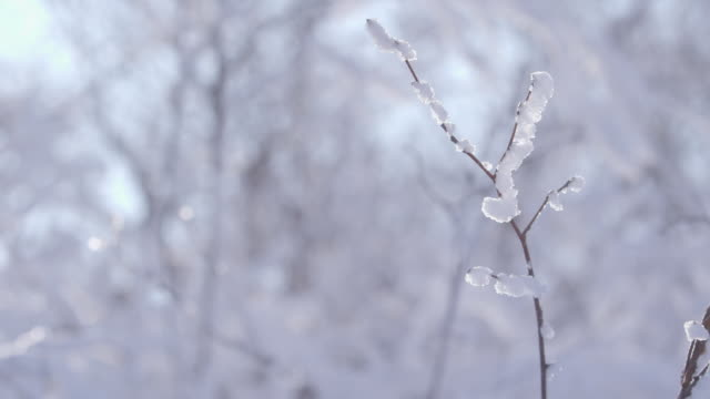 snow on the branches in winter / jeongseon-gun, gangwon-do, south korea - deep snow stock videos & royalty-free footage