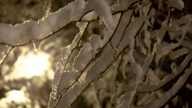 snow on trees at night - frost stock videos & royalty-free footage
