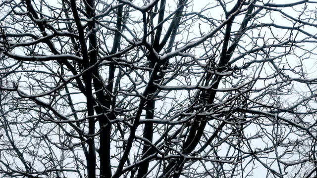 snow over trees - snow cornice stock videos and b-roll footage