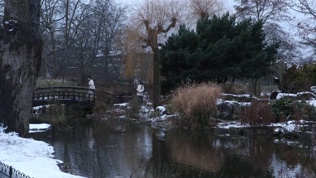 snow remains on the ground by the pond in regents park on january 24, 2021 in london, united kingdom. parts of the country saw snow and icy... - pond stock videos & royalty-free footage