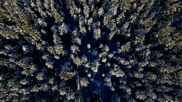 snow scene of forest at banff national park - alberta stock videos & royalty-free footage