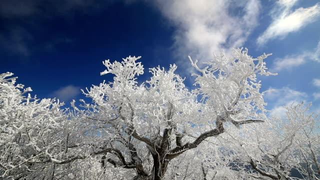 Snow Scene of Mt Barwangsan in Pyeongchang