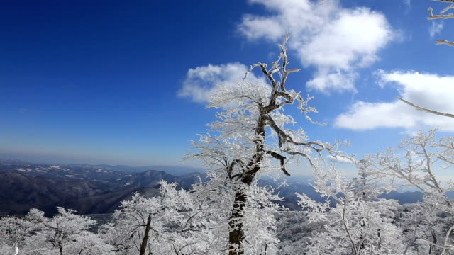 Snow Scene of Mt Barwangsan in Pyeongchang