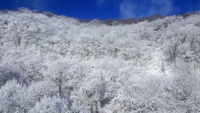 snow scene of mt barwangsan in pyeongchang - pyeongchang stock videos and b-roll footage