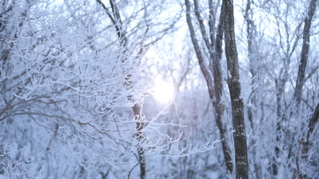 snow scene of tree area at mudeungsan mountain - aufblenden stock-videos und b-roll-filmmaterial