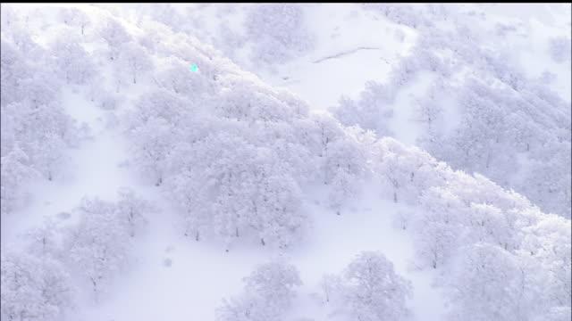 snow scene, shirakami mountain range, virgin beech forest, japan - mountain range点の映像素材/bロール