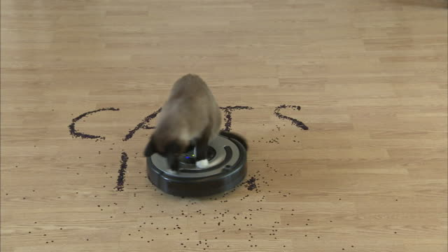 a snow shoe cat rides on a robot vacuum. - vacuum cleaner stock videos & royalty-free footage