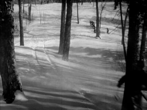 Snow skiers skiing down trail lined w/ trees between trunks down cutting away left jumping small snow bank APRESSKI People entering 'The Inn' large...