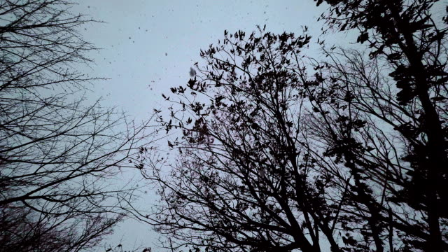 vídeos y material grabado en eventos de stock de tormenta de nieve - plusphoto