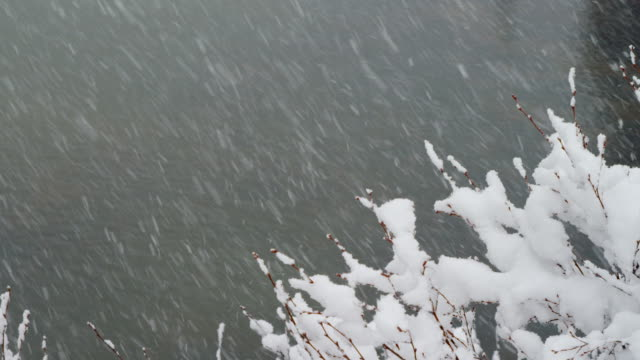 snow storms over pond plant life - pond life stock videos and b-roll footage