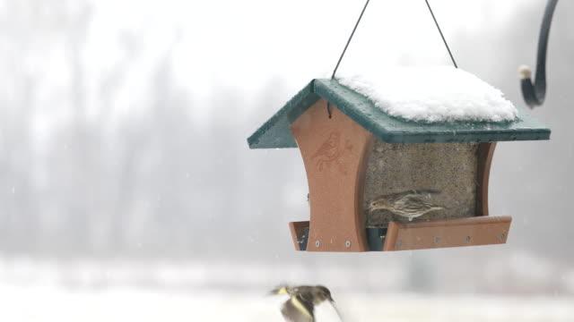 snow - uccellino video stock e b–roll