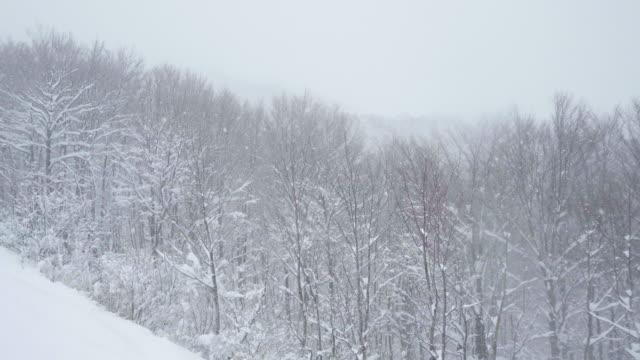 snow wood - 秋田県点の映像素材/bロール
