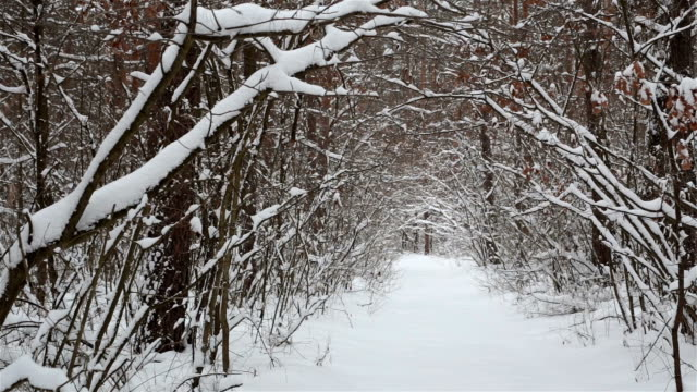 snowbound landscape in the forest. - copse stock videos & royalty-free footage