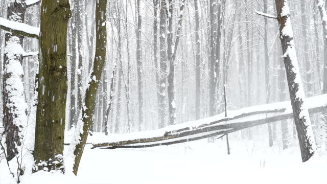 verschneiten landschaft im wald. - baumgruppe stock-videos und b-roll-filmmaterial